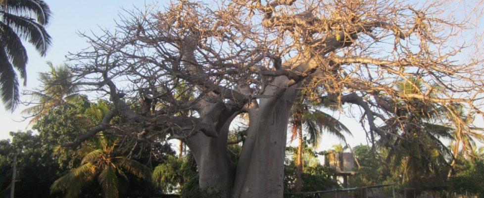 baobab-beach-00001