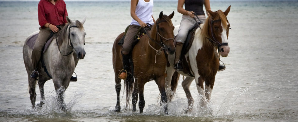 Pass.cavallo3
