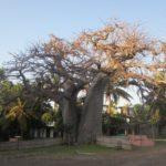 baobab-beach-00001-1024x768